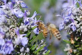 bees on blues